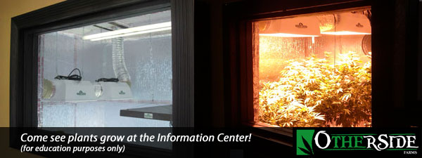 Come see plants grow at the Information Center - for educational purposes only