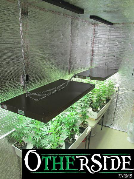 tn IMG 2011 Weekly Plant Pics