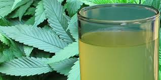 Healing 'Leaf' – Film About Raw Cannabis Juice